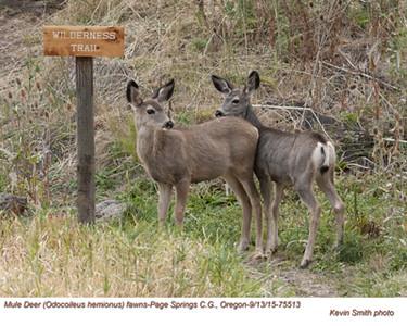 Mule Deer Fawns 75513.jpg