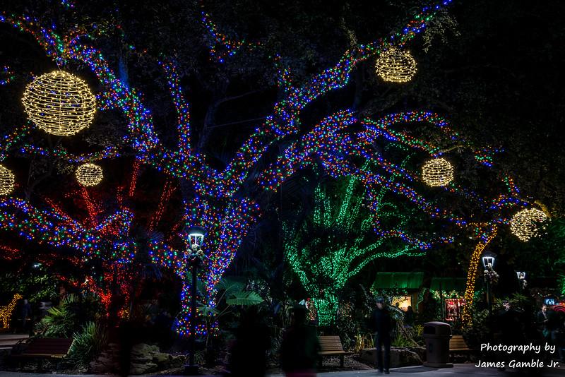 Houston-Zoo-Lights-3038.jpg