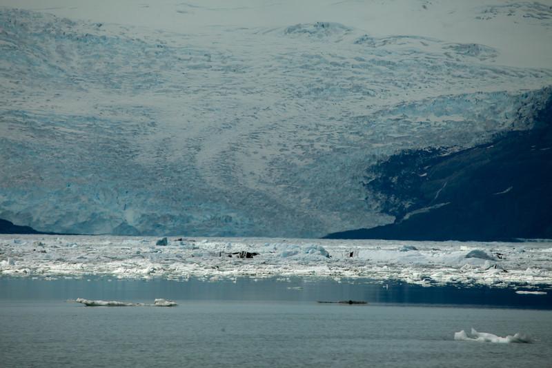 Alaska Icy Bay-4078.jpg