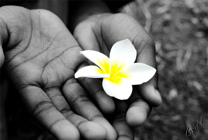 Agum's hands holding a flower from a Kalachuchi tree.