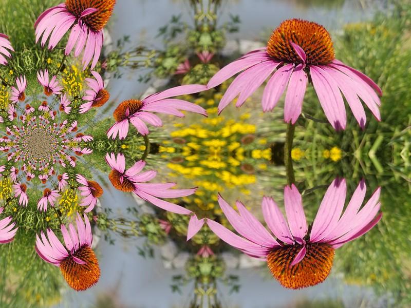 image3A64664_mirror5.jpg