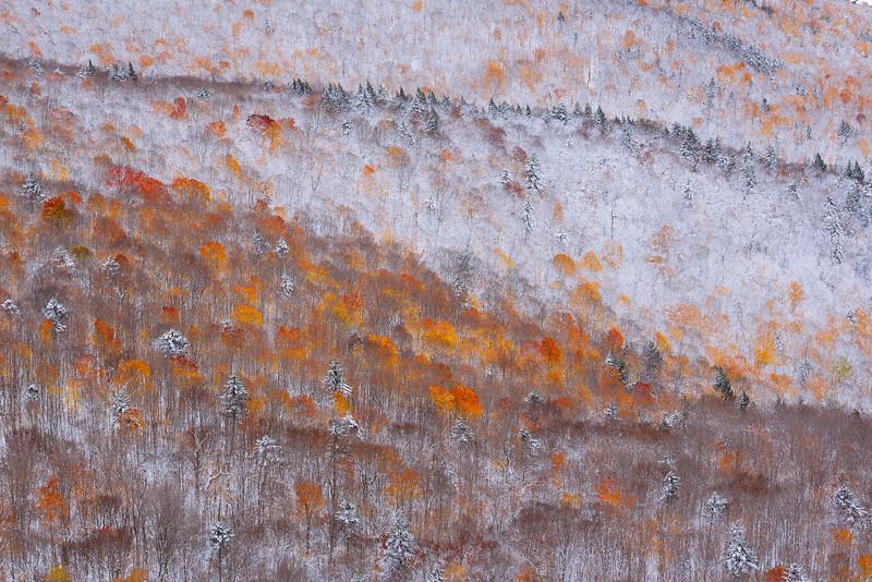 fall meet snow