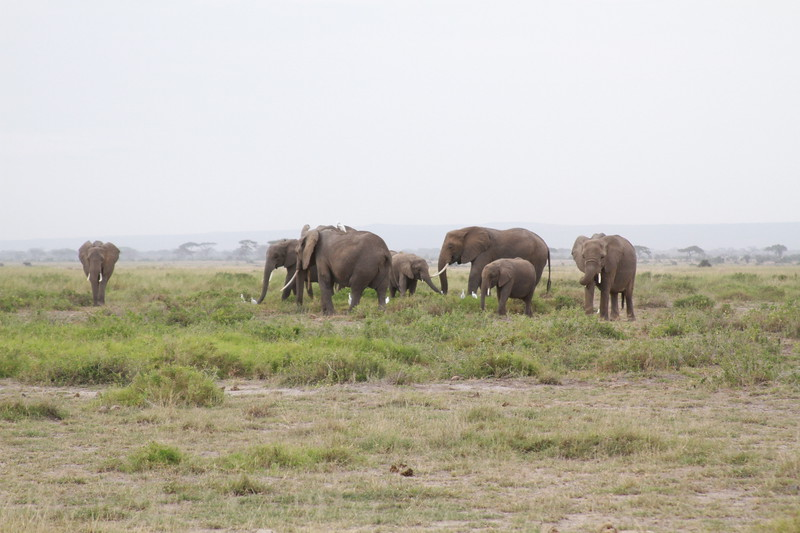 Kenya 2019 #2 405.JPG