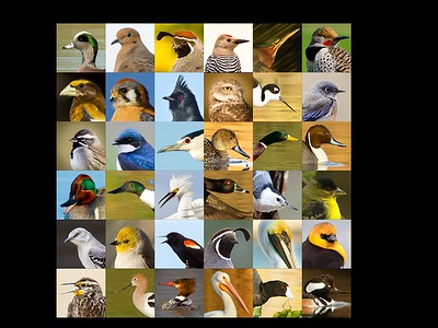 Bird Profiles