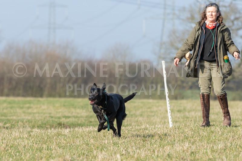 Dog Training Novice GD Feb2019-5799.jpg