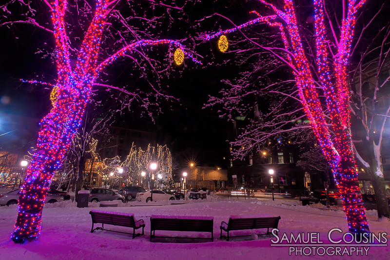 Lights in Tommy's Park