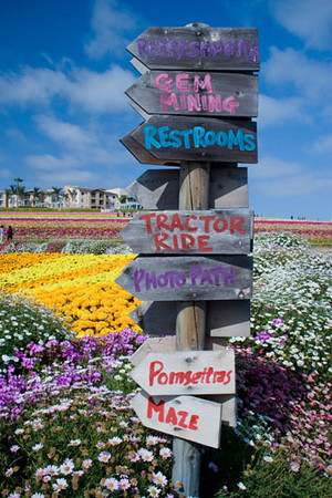 Flower Field in Carlsbad, California