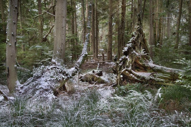 DSC_1092 Fern trail snow 1.14.20.jpg
