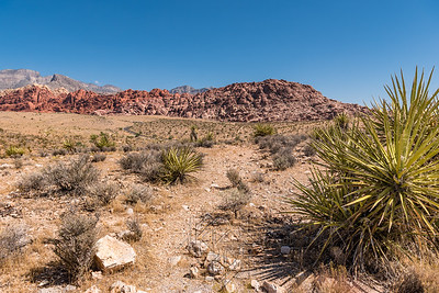 View of Red Rock range with cacti bush in right foreground