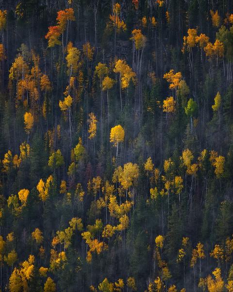zzz (Unknown) - Lone Trees