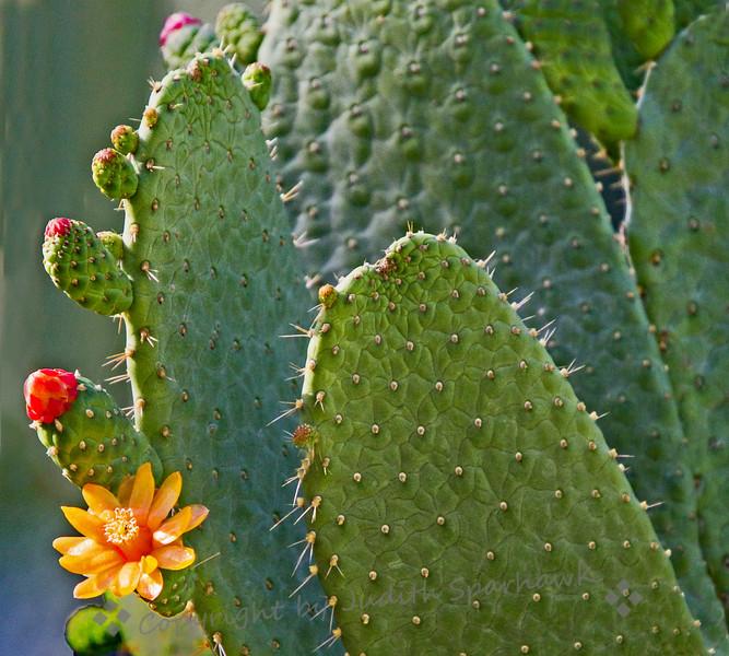 Cactus Surprise