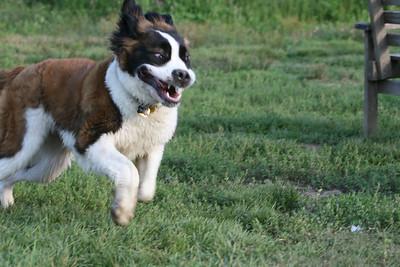 Bella goes to Paw Run!