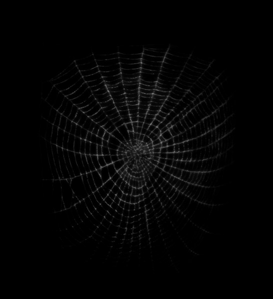 Spider Web 8.jpg