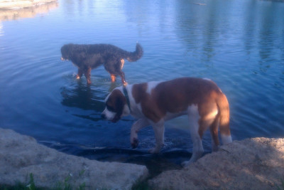 2012.7.21 The girls and the pond