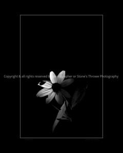 015-flower-wdsm-28jul13-12x18-003-bw-bbp-3063