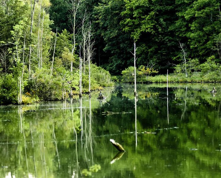 20100818_lake_isaac_028_pano.jpg