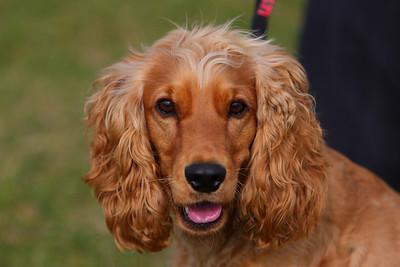 Doggy Portraits