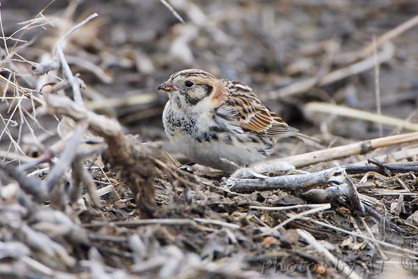 2010-02-19 Riverlands Migratory Bird Sanctuary