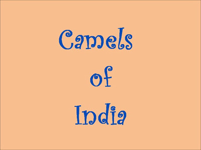 Camels of India