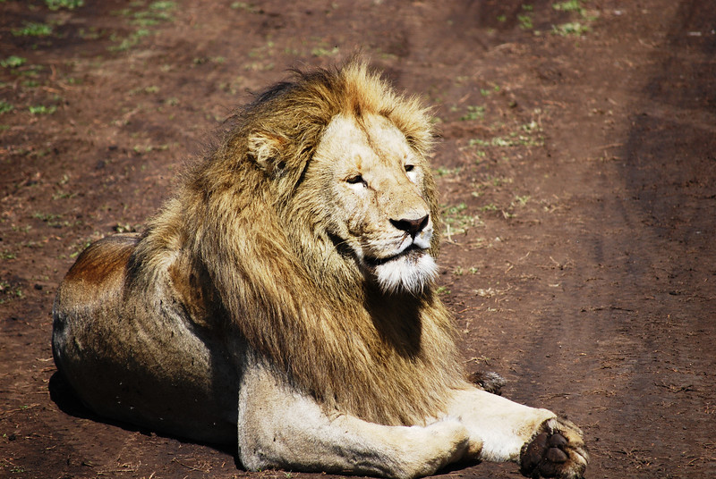 Ngorongoro (120).JPG