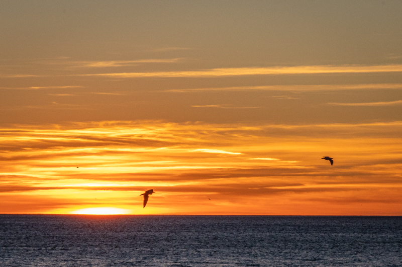 December 31 - Birds looking for dinner during the last sunsetr of 2019.jpg
