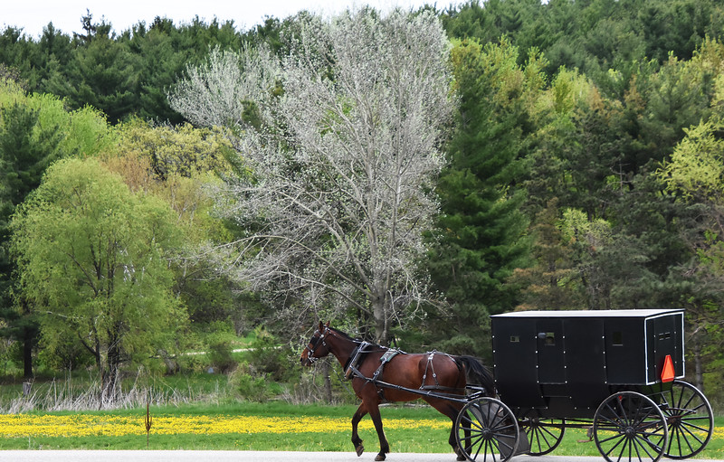 04  Horse and buggy Amish- Roper Markesan jpg.jpg