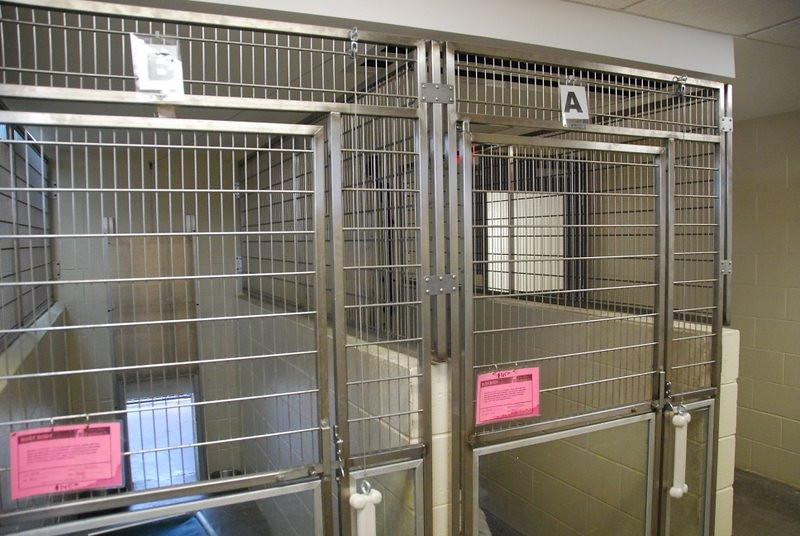Kentucky Humane Society 2010 034.jpg