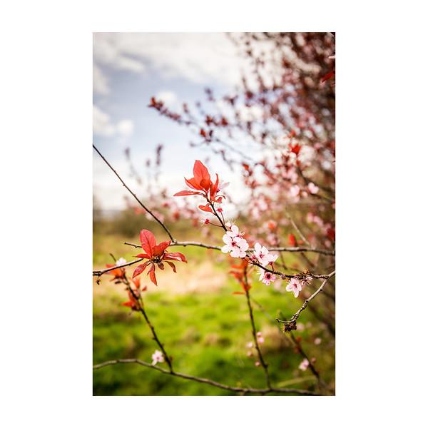 94_Blossom_10x10.jpg