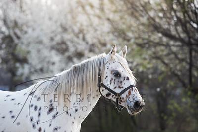 Horse Breeds