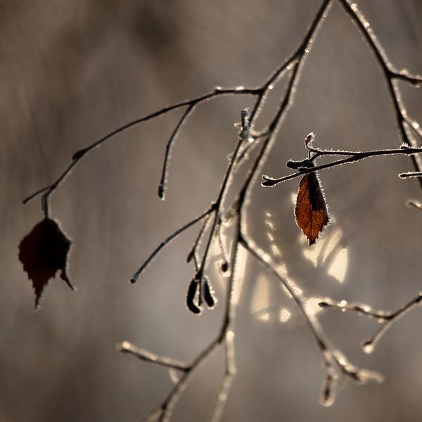 Dag_203_2012-okt-31_2103.jpg