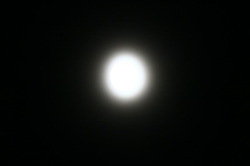 SHAY9668.JPG