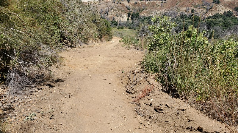 20190810066-Los Pinetos trailwork.jpg