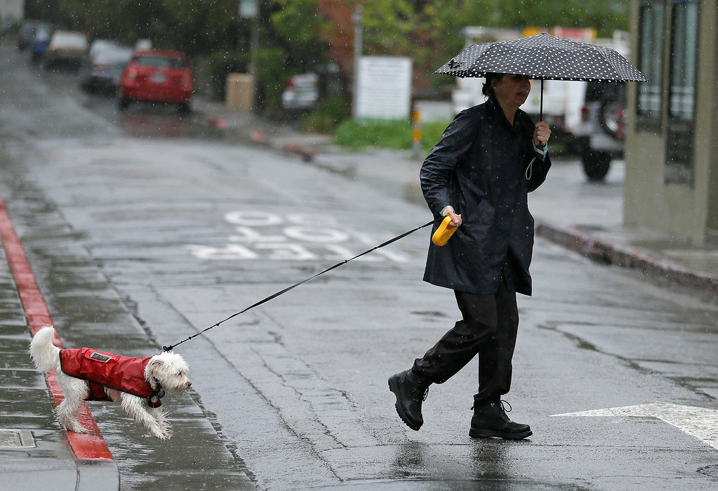 . A woman walks her dog in the rain Monday, Feb. 20, 2017, in San Anselmo, Calif. Heavy downpours are swelling creeks and rivers and bringing threats of flooding in California\'s already soggy northern and central regions. The National Weather Service map shows floods, snow and wind advisories for the northern part of the state. (AP Photo/Eric Risberg)