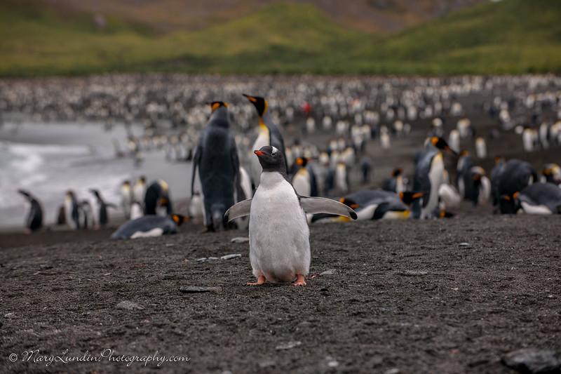 Antarctic-134