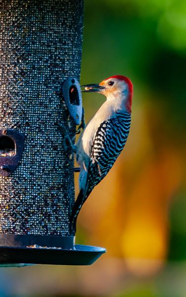 At My Bird Feeder
