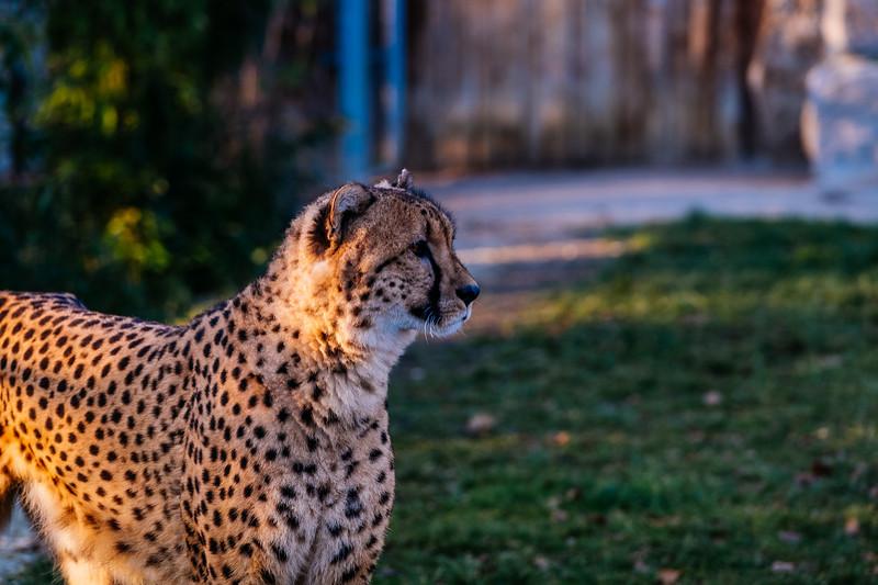 Tonis Zoo-0275.jpg