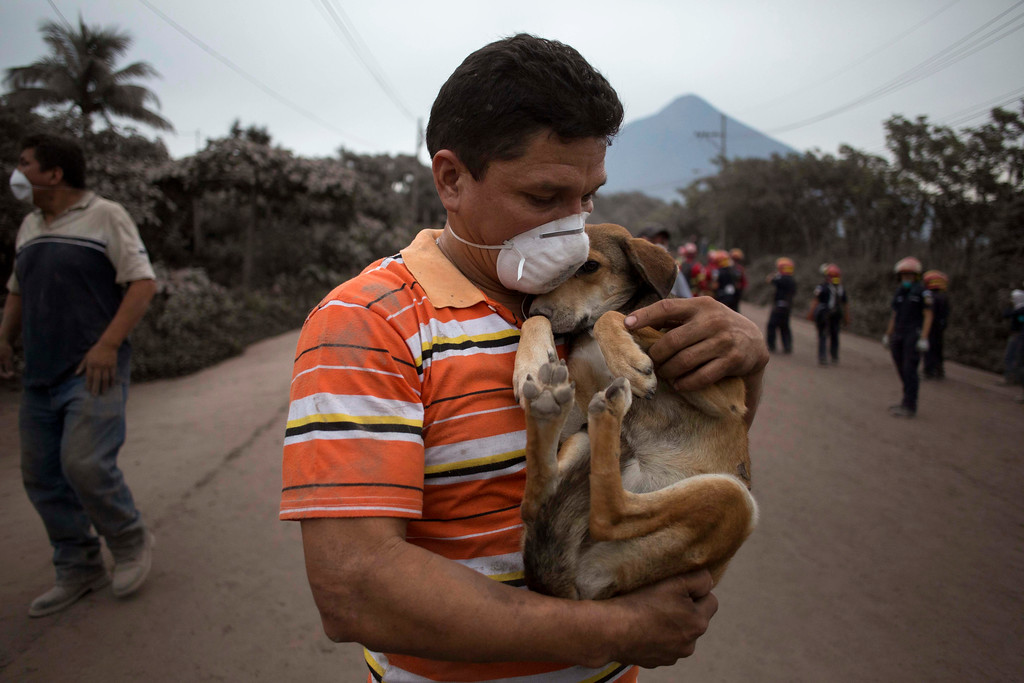 ". A resident cradles his dog after rescuing him near the Volcan de Fuego, or ""Volcano of Fire,\"" in Escuintla, Guatemala, Monday, June 4, 2018. A fiery volcanic eruption in south-central Guatemala sent lava flowing into rural communities, killing at least 25 as rescuers struggled to reach people where homes and roads were charred and blanketed with ash. (AP Photo/Luis Soto)"