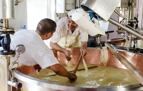 Making of Parmigiano Reggiano