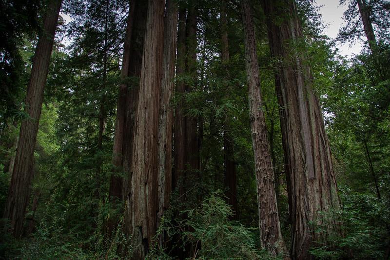 Redwood-60.jpg
