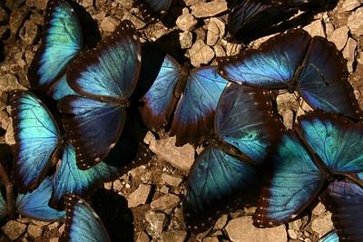Belize 2006 (Fauna and Flora)