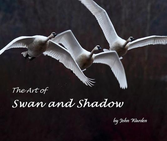 swan and shadow.jpg