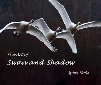 The Art of Swan and Shadow Gallery
