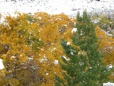 Lamoille Canyon-Fall 2007-JEA- Snowy Day