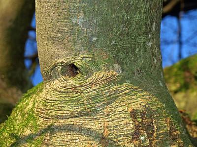 miscellaneous trees