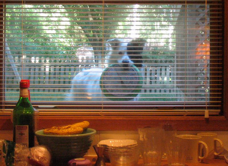LIttle Bit through the kitchen window