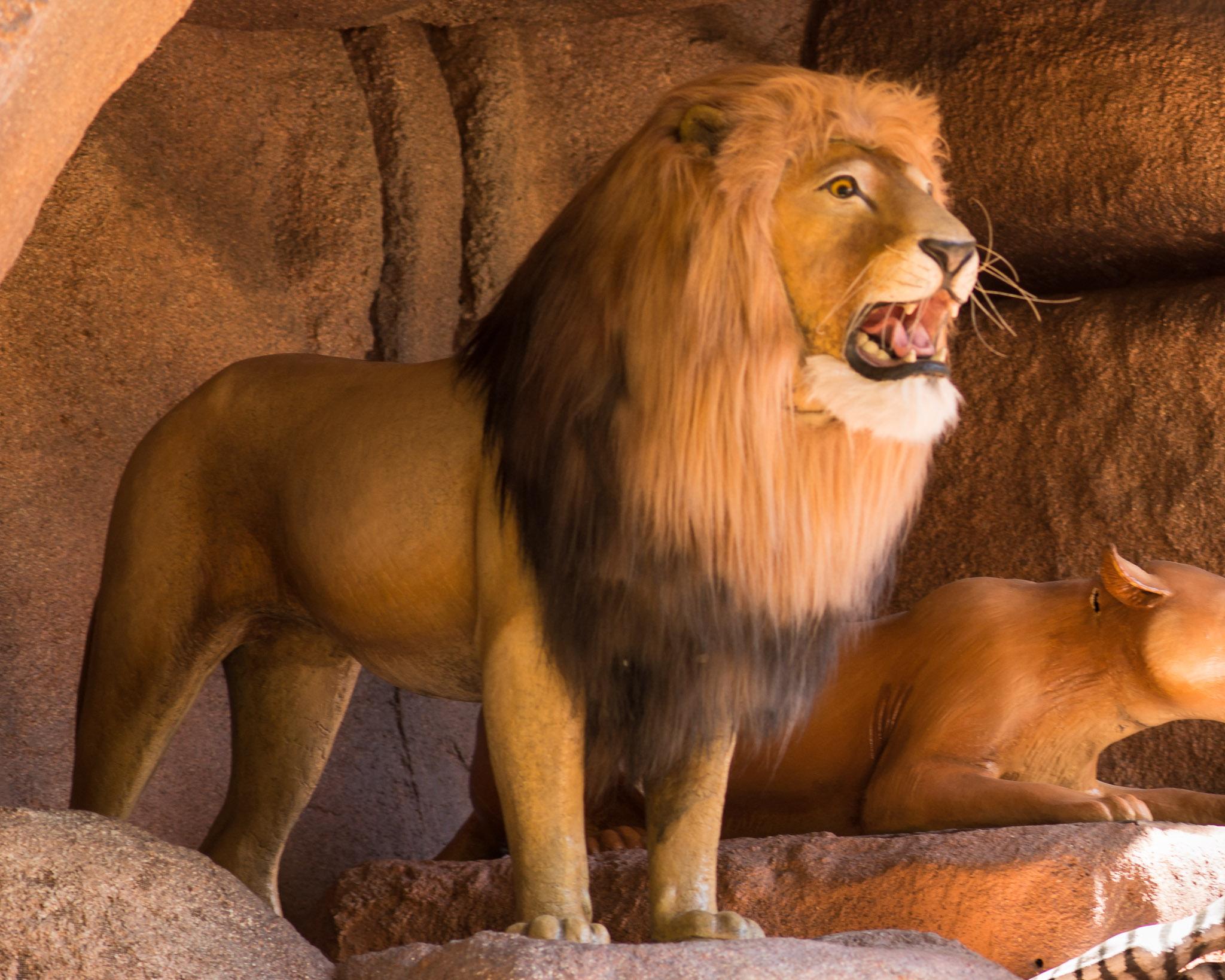 Jungle Cruise Lion - Walt Disney World Magic Kingdom