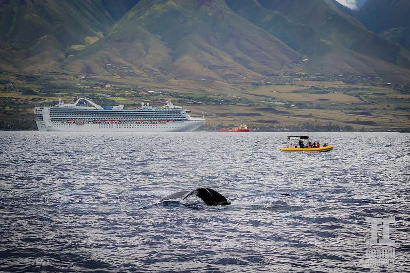 Whale 09.jpg