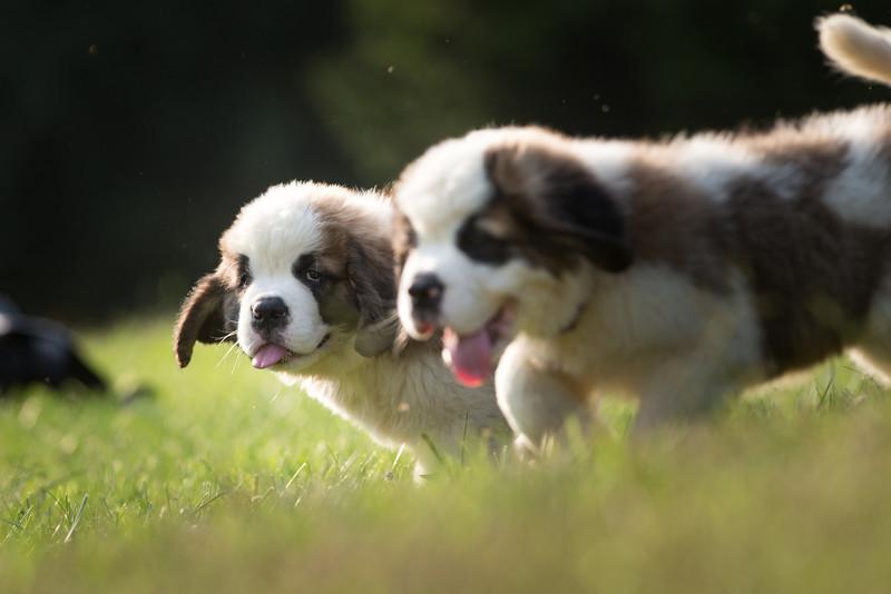 13_0910_puppies_ww-6114.jpg