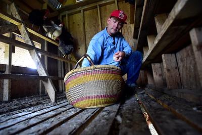 Photos: McCauley Farms Egg Collecting