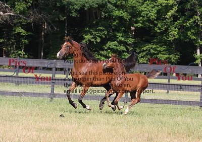 J&M Arabians
